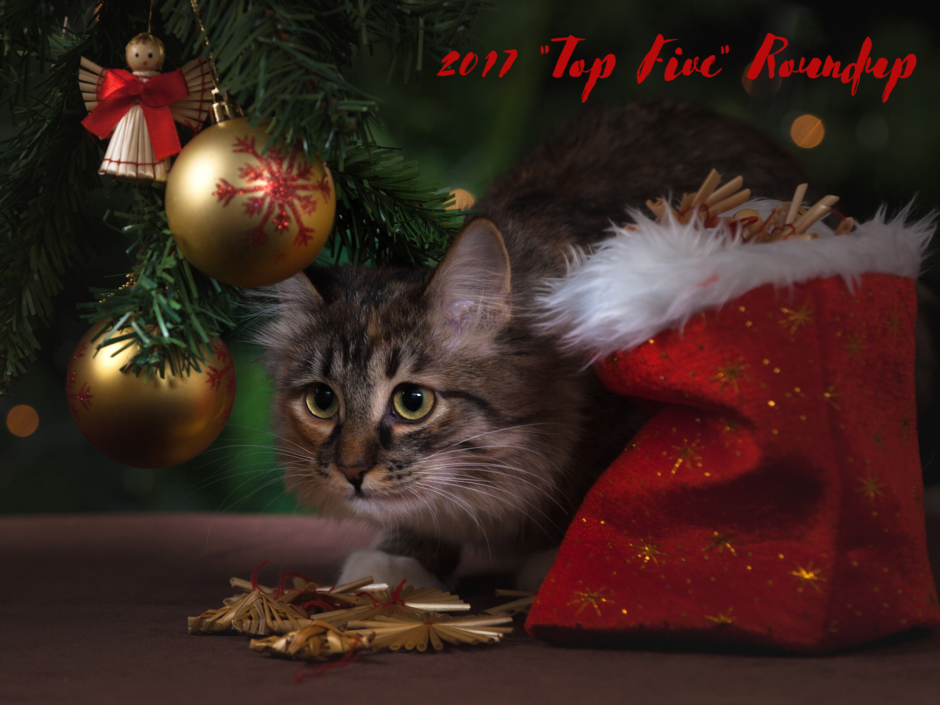 A cat hiding under a Christmas tree, for a post of Top 5 roundups of 2017