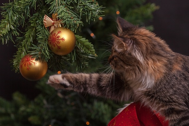 A fluffy tabby cat playing with a gold bauble handing from a Christmas tree. For a post about Top 5s of 2017.