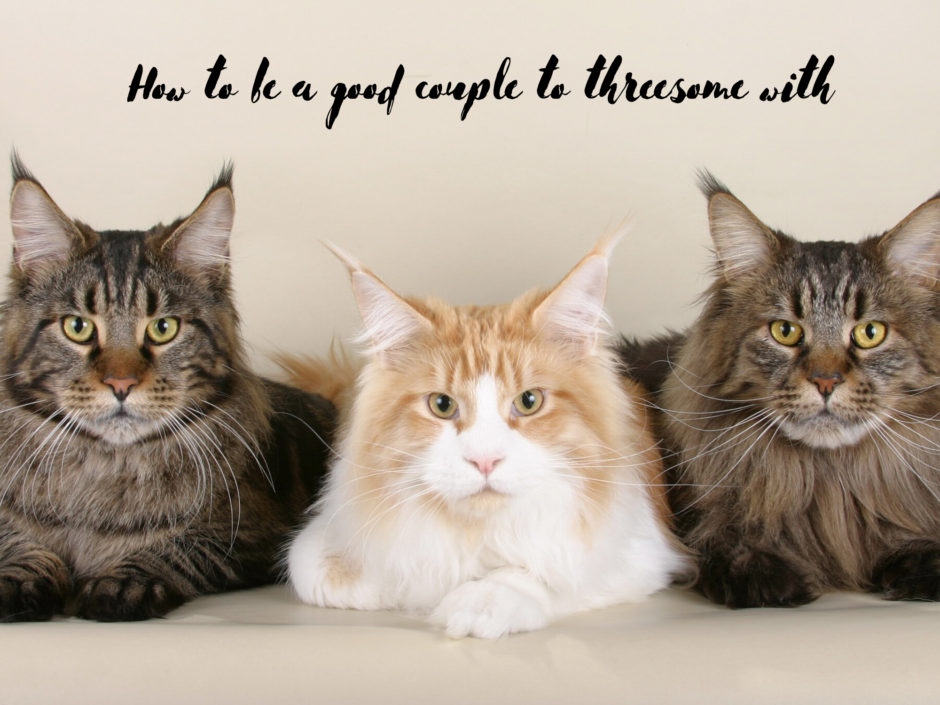 Three cats, for a post about how to be a good couple to threesome with