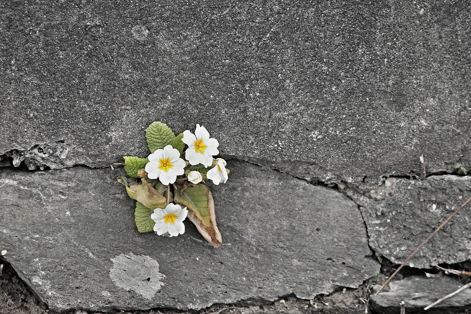 A cracked wall with flowers growing out of it. For a post on safety philosophies in kink.