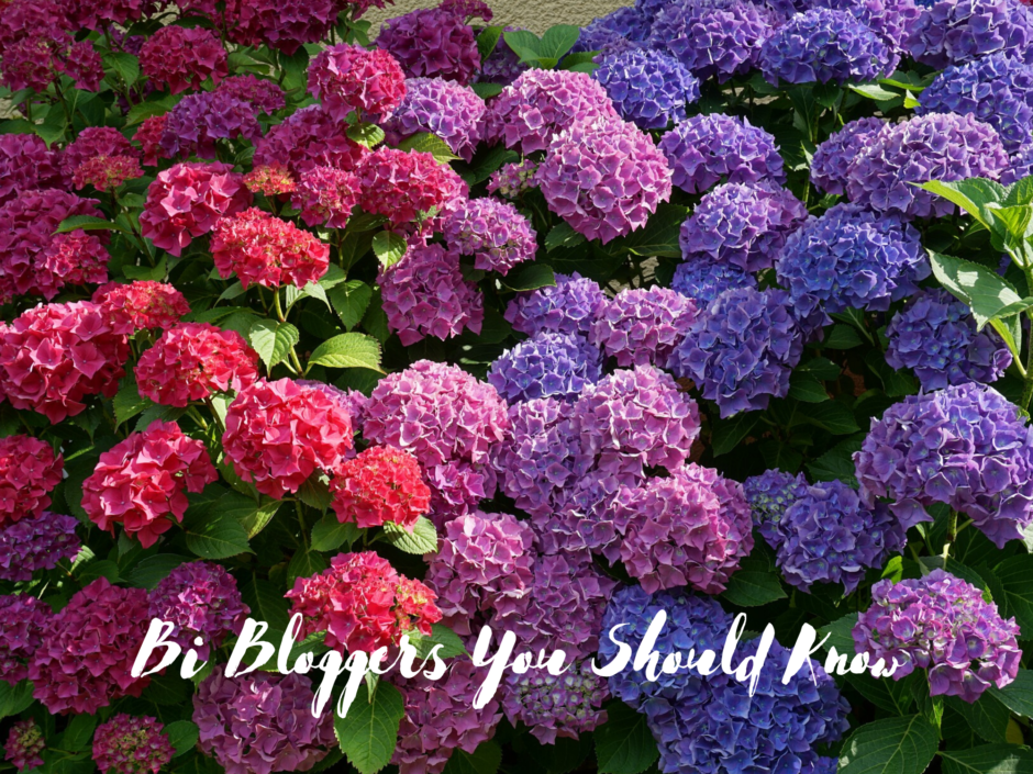 Hydrangeas in the colours of the bi pride flag, for a post about bi bloggers