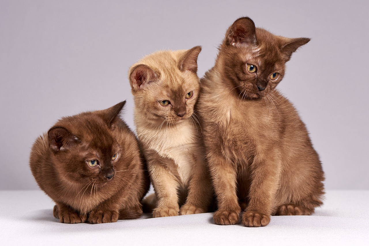Three brown kittens. For a post about You Me Her and polyamory