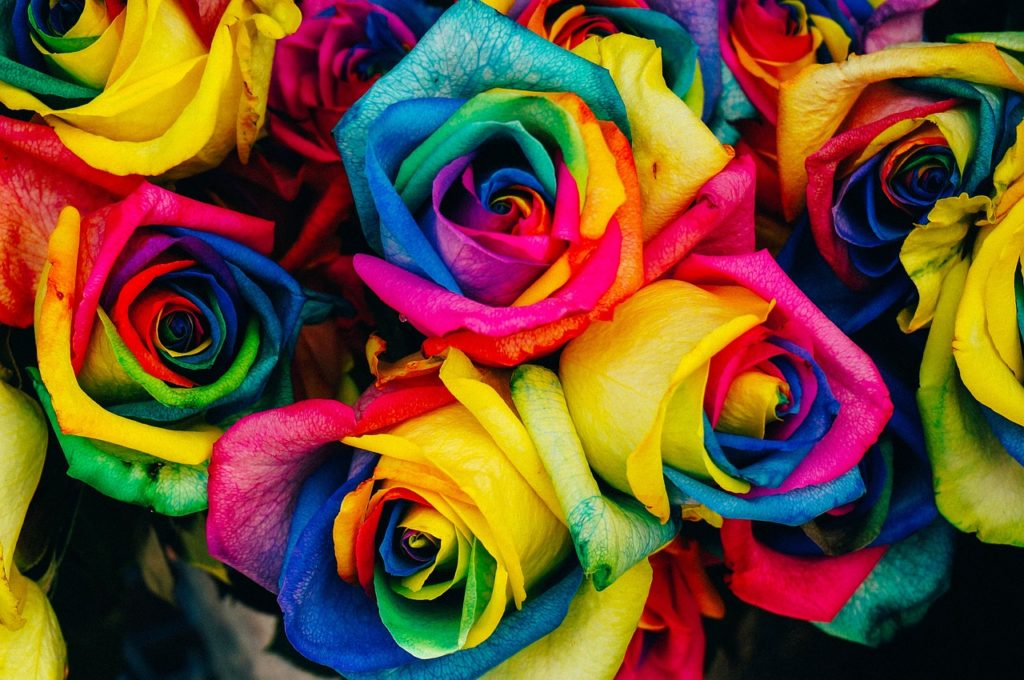 A bunch of bright multicoloured roses for a review of a leather pride harness