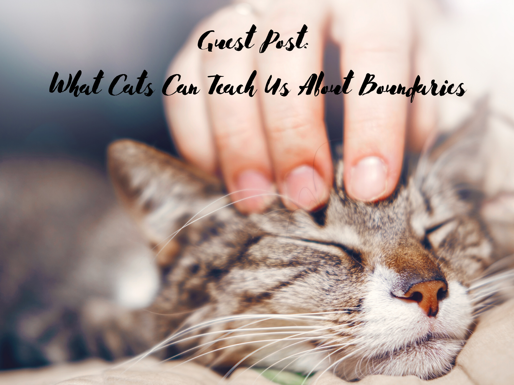 [Guest Blog] What Cats Can Teach Us About Boundaries by Quenby