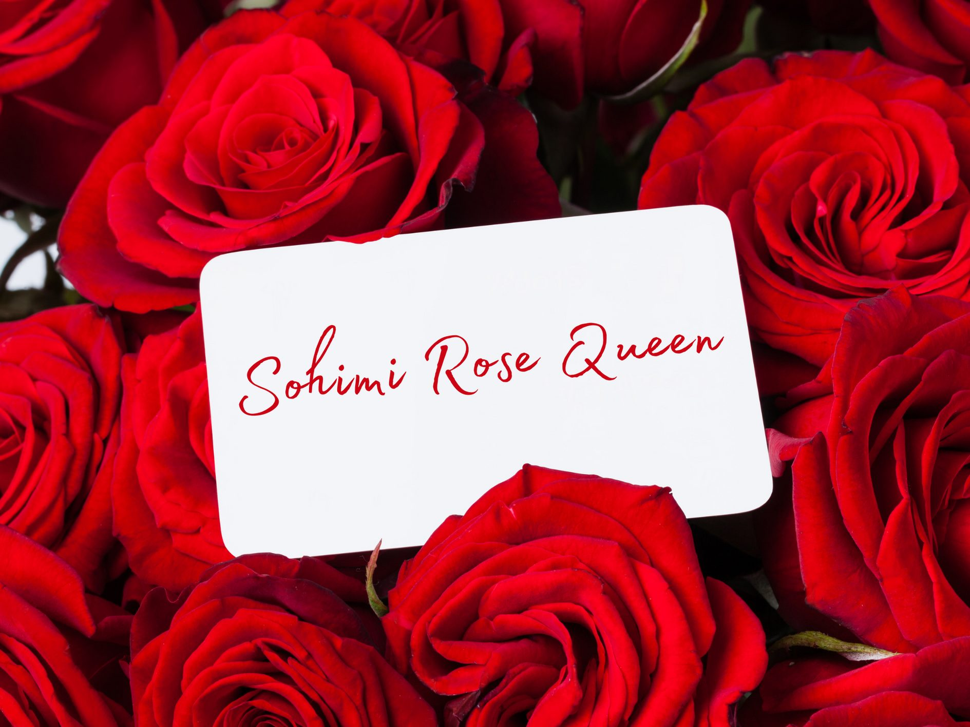 [Toy Review] Sohimi Rose Queen